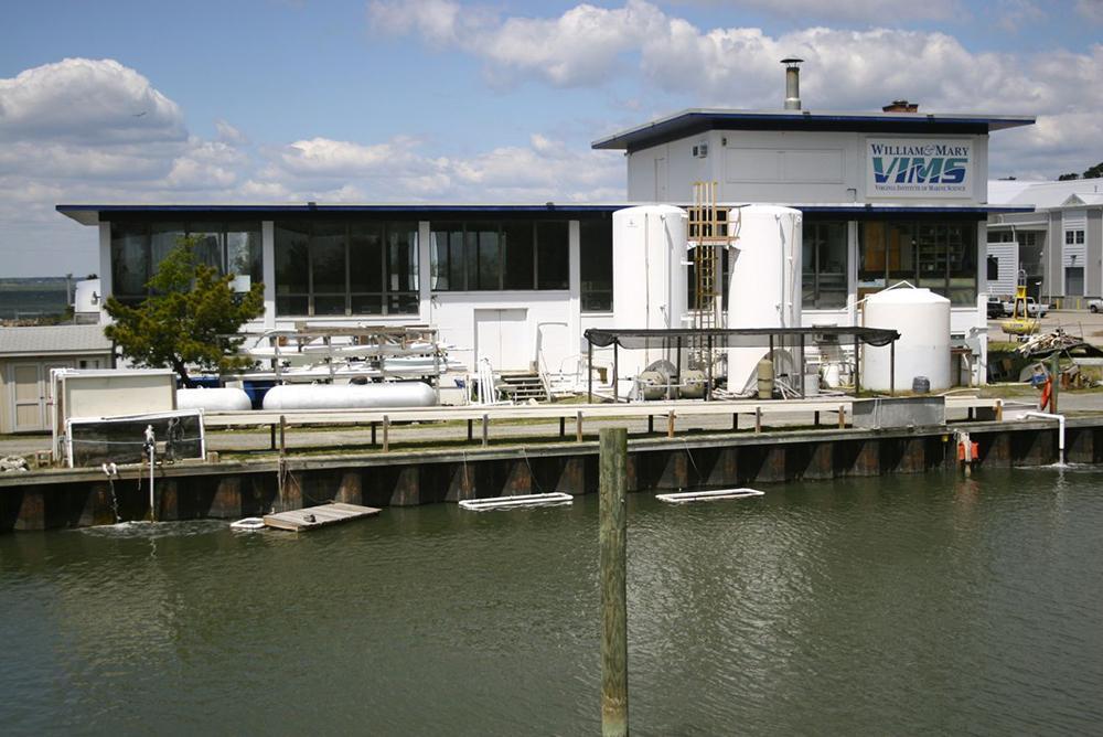 VIMS - Oyster Hatchery
