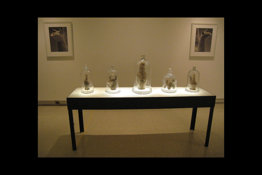 J.J. McCracken: Bell Jars; local Maryland and Washington, D.C., clay with Rhizopus mold and Rhizopus, Penicillium, & Aspergillus mold mixture, 2008–current (living)