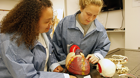 Two students stand in the anatomy lab holding a replica of a human heart.