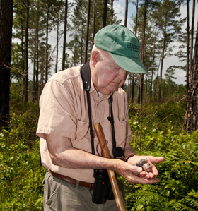 Mitchell Byrd examines woodpecker brood within the Piney Grove Preserve. Byrd conducted the first comprehensive work with the Virginia population in 1977. Photo by Bryan Watts.