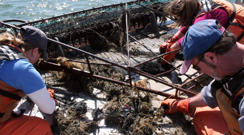 Sorting the Catch: