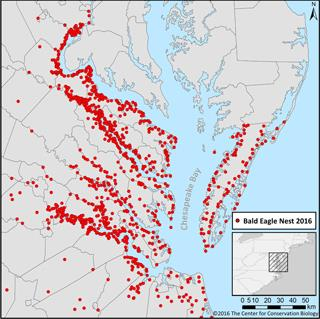 CCB map shows Virginia bald eagle breeding population in 2016, a 50-fold since the DDT low of the early '70s.