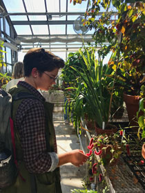 Kat Mail '17 explores the greenhouse. (Photo by Kristen Popham '20)