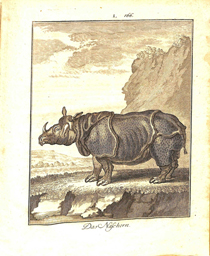 Copperplate engraving of an Indian rhinoceros, based on the 1749 painting Clara le Rhinoceros by Jean-Baptiste Oudry (1686-1755).