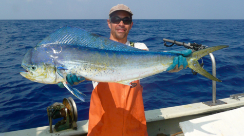 Dolphinfish: