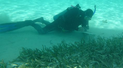 Healthy seagrass bed: