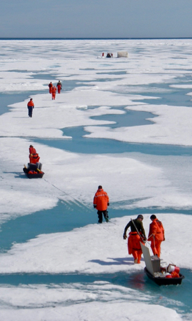 A science team traverses Arctic sea ice during a previous research cruise. (Photo by E. Shadwick/VIMS)