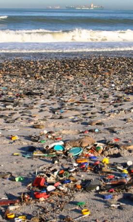 Studies effects microplastics ocean