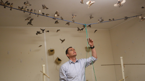 It's about bird behavior: