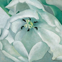 """White Flower"" by Georgia O'Keefe is part of the Virtual Muscarelle exhibition ""Women with Vision: Masterworks from the Permanent Collection."" (Photo courtesy of Muscarelle Museum of Art)"