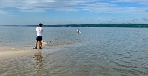 A person is seining for striped bass