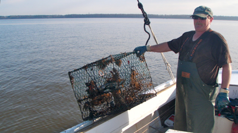 A waterman holds a crab pot on the side of a boat