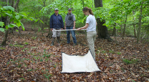 Joanna Weeks  drags a cloth to collect ticks in the College Woods