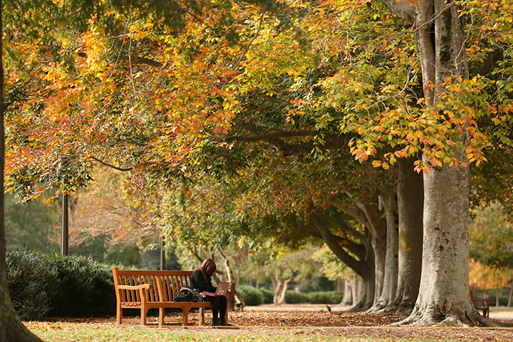 Student sits on a bench surrounded by fall foliage