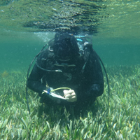 A diver writes on a notebook underwater above a field of seagrass