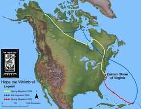 Center for Conservation Biology map shows Hope's full-circle migration.