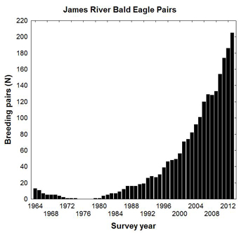 A graph traces the explosion of the eagle population along the James River from 1964 through 2013. Data courtesy of the Center for Conservation Biology.