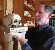 Mann examines skulls at the Magyar Termeszettudomanyi Museum in Budapest, Hungary in 2012. (photo courtesy of Robert Mann '81)