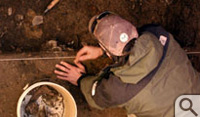 An archeologist excavates 400 year-old oyster shells from the Jamestown well.