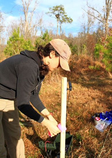 Courtney Turrin installs a video camera on a wooden stake