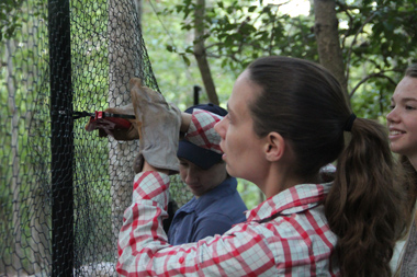Botanist Harmony Dalgleish leads a crew making deer-resistant enclosures